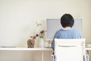 デスクでパソコンを開き仕事をする女性と子猫の写真素材 [FYI04734480]