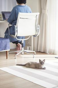 デスクでパソコンを開き仕事をする女性と子猫の写真素材 [FYI04734481]