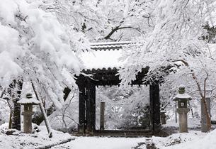 秋月城跡黒門の雪景色の写真素材 [FYI04734561]