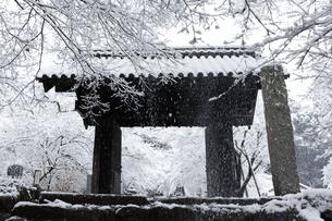 秋月城跡黒門の雪景色の写真素材 [FYI04734562]