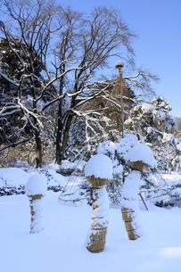 六義園の霜よけと雪吊りの写真素材 [FYI04734630]