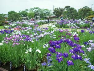 東京都 堀切菖蒲園の写真素材 [FYI04734818]