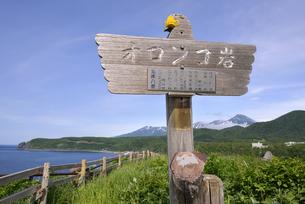 初夏のオロンコ岩(北海道・知床)の写真素材 [FYI04735209]