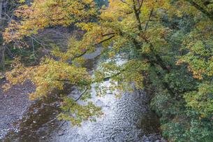 盛秋の秋川渓谷の写真素材 [FYI04735255]