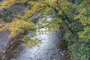 盛秋の秋川渓谷の写真素材 [FYI04735257]