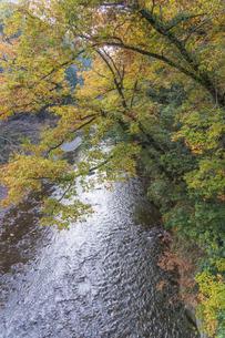 盛秋の秋川渓谷の写真素材 [FYI04735260]