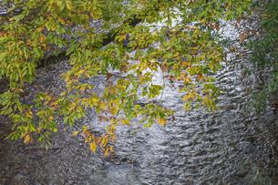 盛秋の秋川渓谷の写真素材 [FYI04735265]