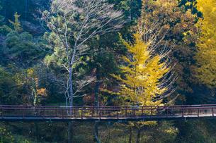 盛秋の秋川渓谷・石船橋の写真素材 [FYI04735285]