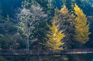 盛秋の秋川渓谷・石船橋の写真素材 [FYI04735287]