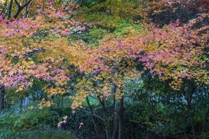 盛秋の秋川渓谷の写真素材 [FYI04735290]