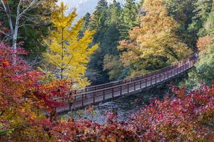 盛秋の秋川渓谷・石船橋の写真素材 [FYI04735296]