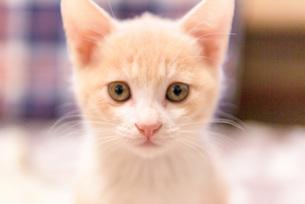 じっと見つめる子猫の写真素材 [FYI04735299]