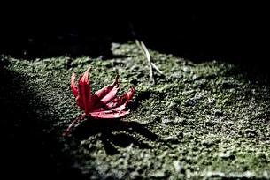 落ち葉の写真の写真素材 [FYI04735308]