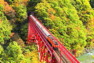 紅葉の黒部峡谷 黒部川の清流とトロッコ列車の写真素材 [FYI04735318]