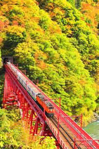 紅葉の黒部峡谷 黒部川の清流とトロッコ列車の写真素材 [FYI04735320]