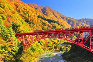 秋の黒部峡谷 トロッコ列車と紅葉の山並みに快晴の空の写真素材 [FYI04735322]