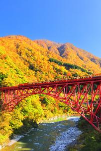 秋の黒部峡谷 トロッコ列車と紅葉の山並みに快晴の空の写真素材 [FYI04735323]