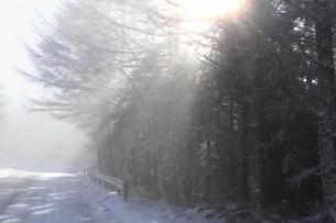 大台ケ原ドライブウエイの雪と斜光の写真素材 [FYI04735334]