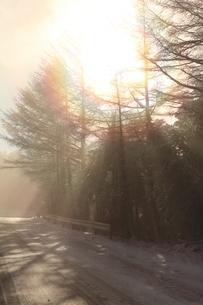 大台ケ原ドライブウエイの雪と斜光の写真素材 [FYI04735335]