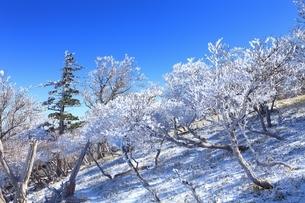 樹氷の大台ケ原の写真素材 [FYI04735341]
