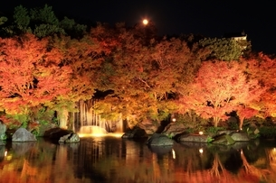 紅葉の姫路城・好古園ライトアップの写真素材 [FYI04735370]
