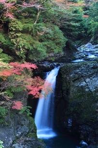 紅葉の高野大滝の写真素材 [FYI04735372]