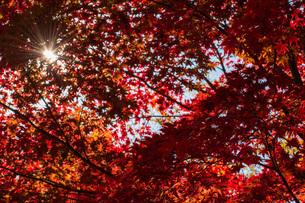 紅葉と光芒の写真素材 [FYI04735392]