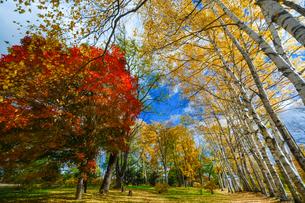 つつじ公園の紅葉の写真素材 [FYI04735402]