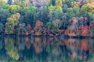 北海道秋の風景 オンネトーの紅葉の写真素材 [FYI04735512]