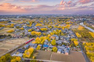 イチョウ並木で黄金に染まる街、祖父江町を空撮の写真素材 [FYI04735547]