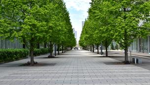 並木道の風景の写真素材 [FYI04736114]