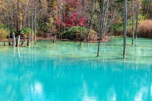 北海道秋の風景 青い池の紅葉の写真素材 [FYI04736262]