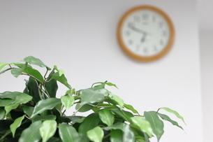 オフィス内の観葉植物と掛時計(残業中)の写真素材 [FYI04736297]