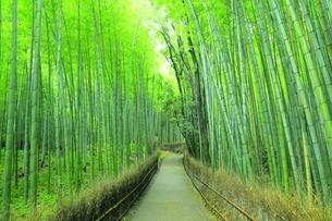 夏の竹林の小道の写真素材 [FYI04736340]