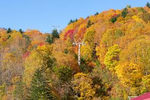 北海道秋の風景 札幌市の紅葉の写真素材 [FYI04736623]
