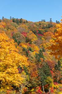 北海道秋の風景 札幌市の紅葉の写真素材 [FYI04736629]