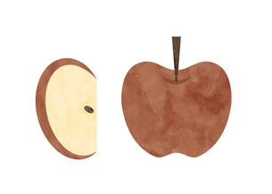 りんご カットりんご 水彩イラストのイラスト素材 [FYI04736963]
