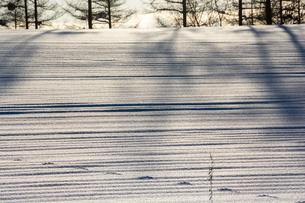 雪原の影と野生動物の足跡の写真素材 [FYI04737152]