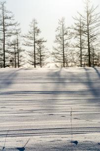 雪原の影と野生動物の足跡の写真素材 [FYI04737153]