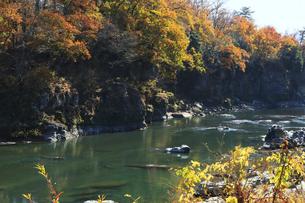 長瀞 渓谷の紅葉の写真素材 [FYI04737199]