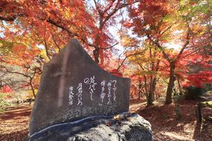 長瀞 月の石もみじ公園に立つ宮沢賢治の文学碑の写真素材 [FYI04737200]