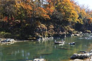 長瀞舟下り 紅葉の渓谷を和舟で舟下りの写真素材 [FYI04737219]