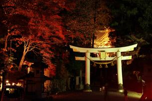 長瀞 宝登山神社のライトアップの写真素材 [FYI04737228]
