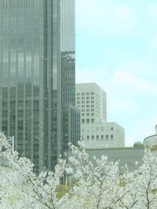 大阪ビジネスパークと桜の写真素材 [FYI04737270]