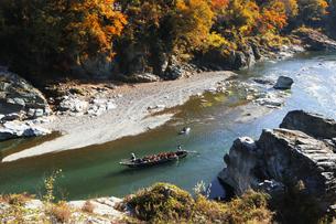 長瀞舟下り 紅葉の渓谷を和舟で舟下りの写真素材 [FYI04737301]