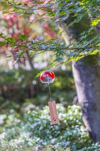 昭和記念公園・秋の日本庭園の写真素材 [FYI04737317]