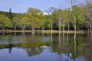 初夏のポンホロ沼(北海道・知床)の写真素材 [FYI04737364]