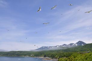 カモメの群と知床連山(北海道・知床)の写真素材 [FYI04737385]