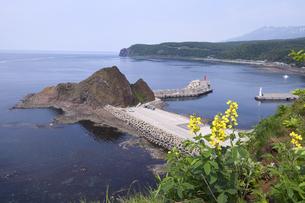 三角岩とセンダイハギ(北海道・知床)の写真素材 [FYI04737398]