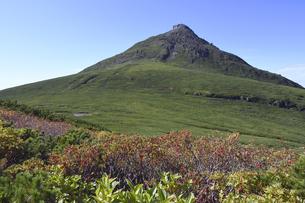 羅臼岳とナナカマドの実(北海道・知床)の写真素材 [FYI04737400]